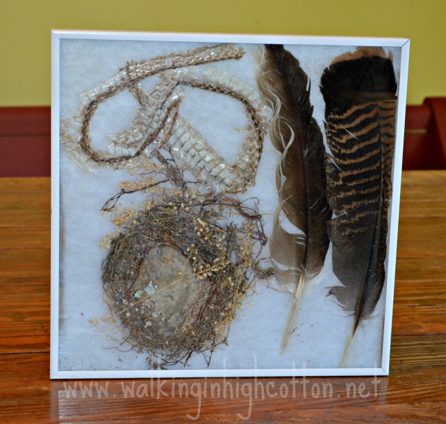 A bird nest with sheep wool in the center, two turkey feathers, and a snake skin.