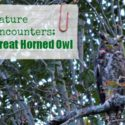 Nature Encounters: The Great Horned Owl...pictures, websites and books {@ www.walkinginhighcotton.net}