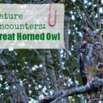Nature Encounters…The Great Horned Owl
