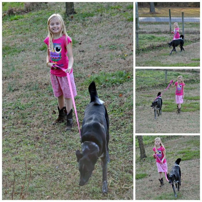 """Each of the children have started taking Penny for a walk on days we are home. They each do """"2 laps around the big field"""" with her one-after-another. It's about 1.5 miles for each of them and about 4 miles for her."""