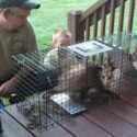 Possum trap for catching an egg eater.