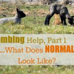 "Lambing Help Part I…What Does ""Normal"" Look Like?"