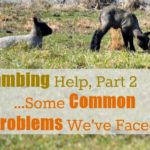 Lambing Help Part 2…Common Problems {Hard Labor}