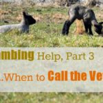 Lambing Help, Part 3…When to Call the Vet