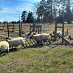 Green Grass and Gate Latches…the Daily Farm Adventures {40}