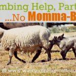 Lambing Help, Part 2…Common Problems {No Momma-Bonding}