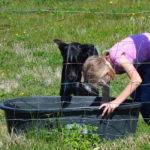Washing Water Buckets, Trucks, and the Dog…the Daily Farm Adventures {50}