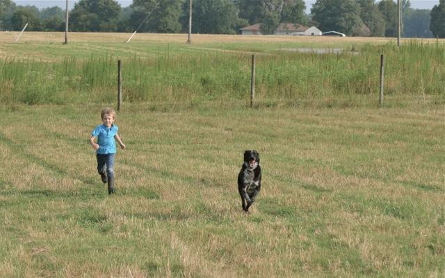 farm dog 5