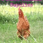 5 Basic Chicken Supplies…the Daily Farm Adventures {59}