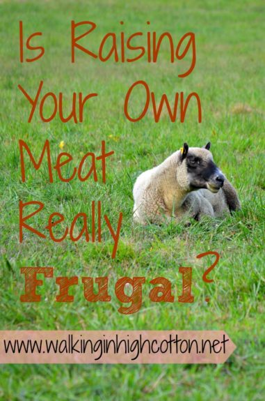 "Is raising your own meat really ""frugal""? Not really, but it can at least be affordable. Some thoughts on REAL costs of raising livestock. {via Walking in High Cotton}"
