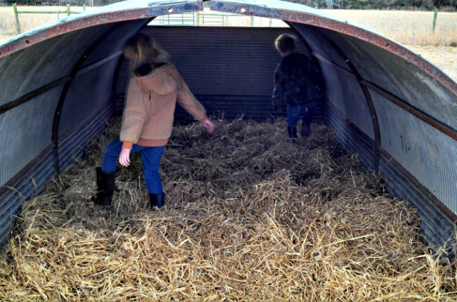 Here's the kiddos bedding down the cow hut. Pretty much any animal could use it, or we could use it for feed or equipment storage.