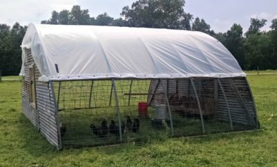 Chicken Hoop House for layers at The Lowe Farm ( via Walking in High Cotton)