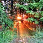 Forest Sunrise and Taking Deep Breaths…the Daily Farm Adventures