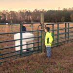Those Boys…the Daily Farm Adventures {95}