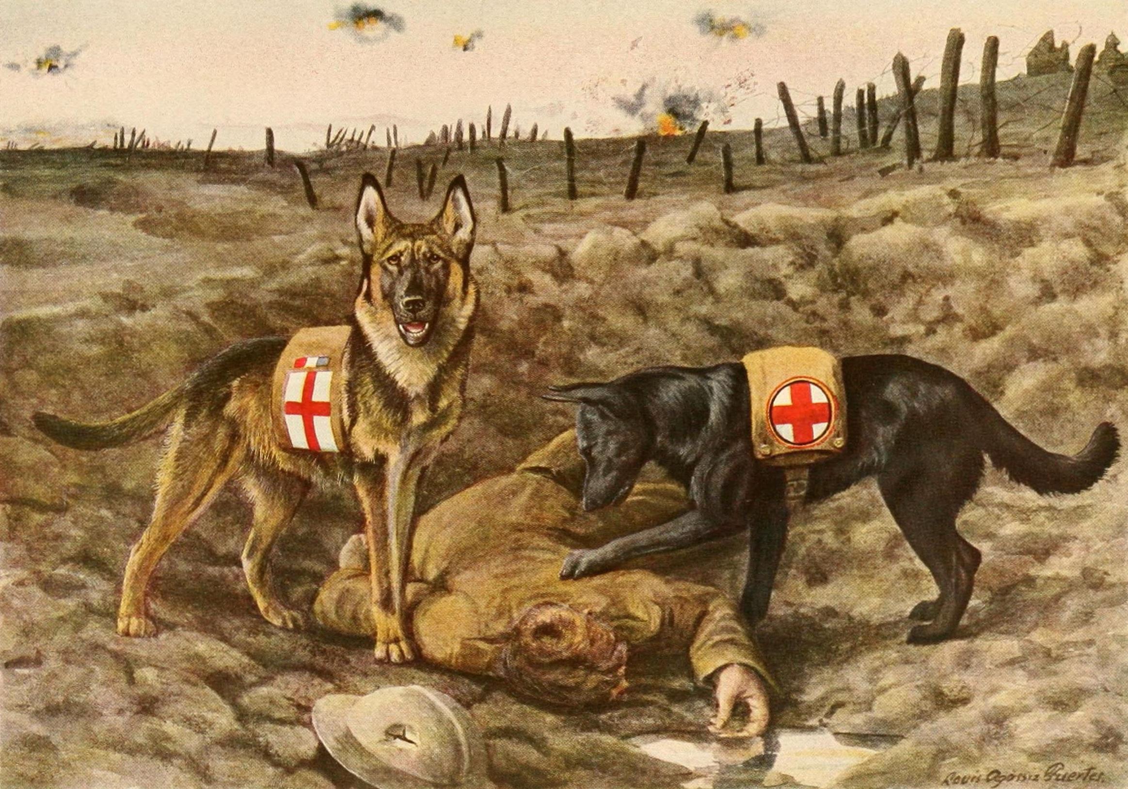 german-shepards-996405
