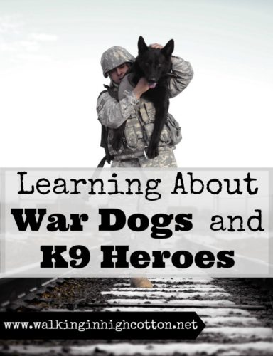 Resources for Learning about War Dogs and K9 Heroes {at Walking in High Cotton} #homeschooling #military #wardogs #heroes
