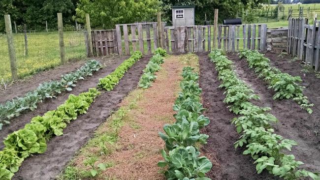 garden 1 month