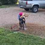 Washing the Dogs…the Daily Farm Adventures {114}