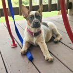 Another Four Paws…the Daily Farm Adventures {115}
