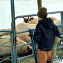 winter chores in the first snow of the year at The Lowe Farm {Walking in High Cotton}