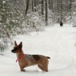 Red's First Snow…Life with Coal the Cattle Dog
