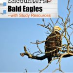Bald Eagle Encounters…Bald Eagle Study Resources