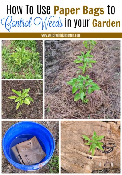 Frugal and Easy way to use FREE paper grocery bags to control weeds in your garden. via Walking in High Cotton