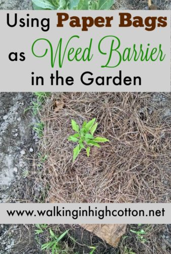How to use brown paper bags from the grocery story as a frugal weed barrier in the garden. Via Walking in High Cotton