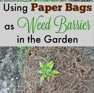 Paper Grocery Bags as Weed Barrier in Your Garden