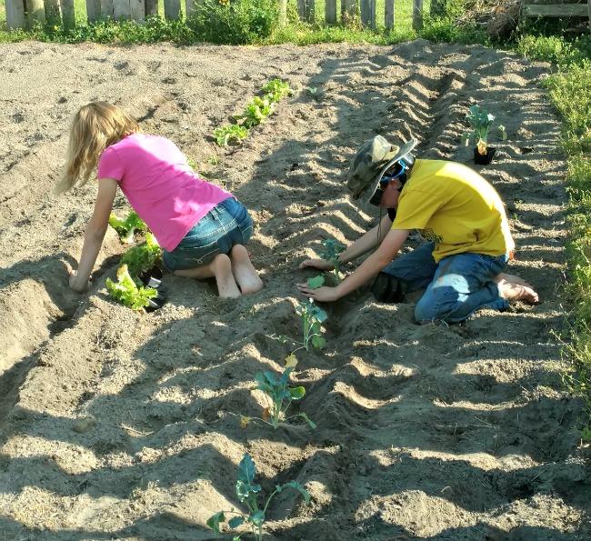 letting kids garden