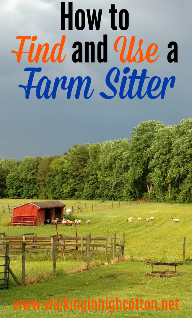 How to Find and Use a Farm Sitter to Enjoy Vacation as a Homesteader... via Walking in High Cotton