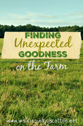 Finding unexpected goodness on the farm @ Walking in High Cotton
