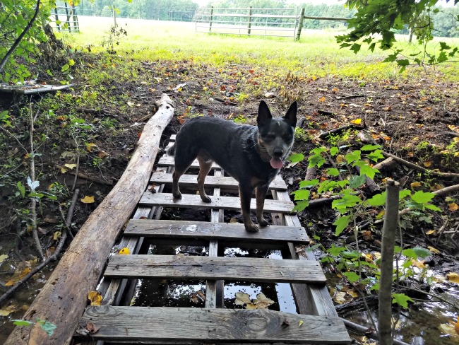 How to use wooden pallets to make simple bridges on the homestead. via Walking in High Cotton