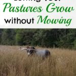 5 Benefits of Letting Your Pastures Grow without Mowing