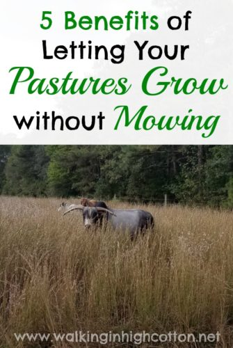 5 Benefits to Letting Your Pastures Grow without Mowing...diversity, wildlife, cost savings, and beauty! ... via Walking in High Cotton