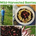 30+ Mulberry Recipes for wild-harvested berries. via Walking in High Cotton --tarts, pies, cheesecake, crumbles, cobblers, lemonade--all in one place!