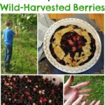 30+ Mulberry Recipes for Wild-Harvested Berries