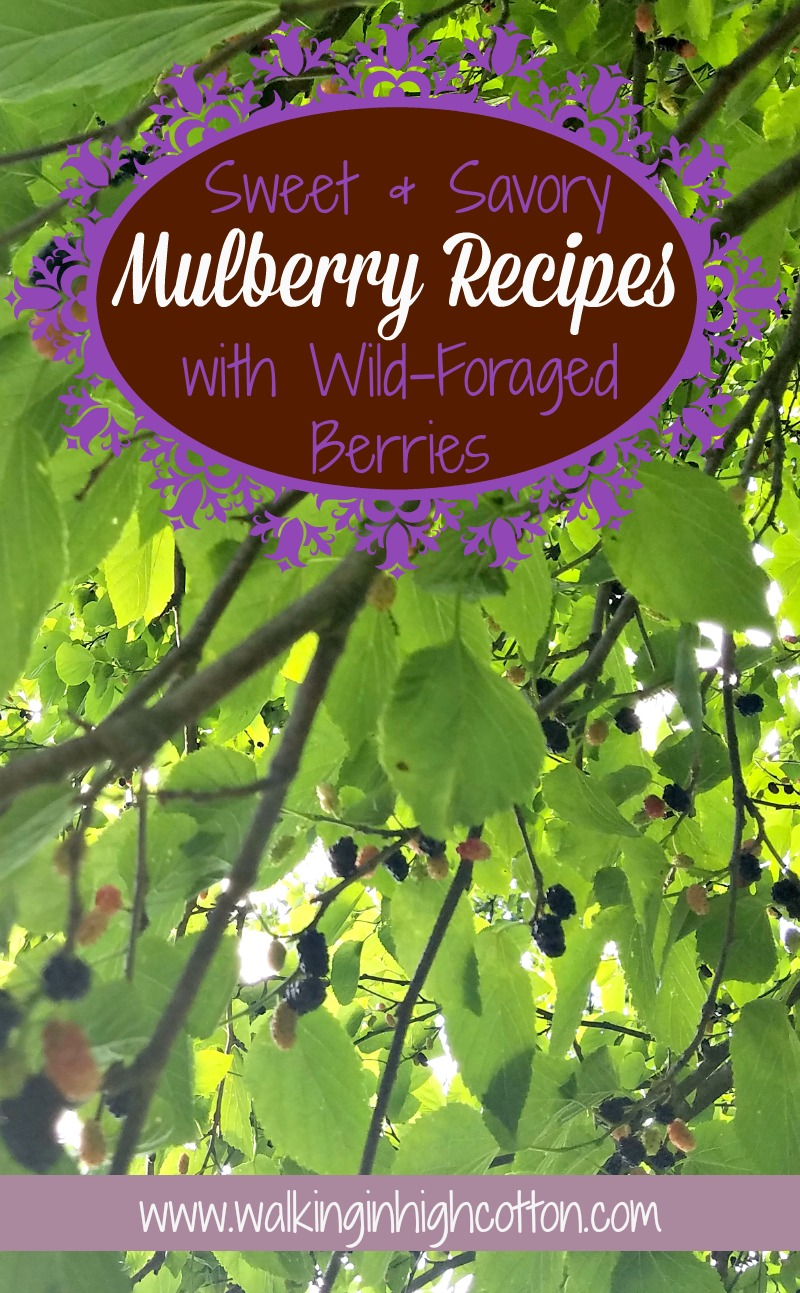 Picked any fresh, tart and tangy Mulberries lately? Here's 30+ Sweet and Savory recipes for your wild harvested, wild foraged, or even orchard planted Mulberries. Mulberry tart, pie, ice cream, cake, muffins, and more!  via Walking in High Cotton