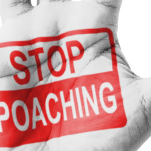 The War Against Poaching