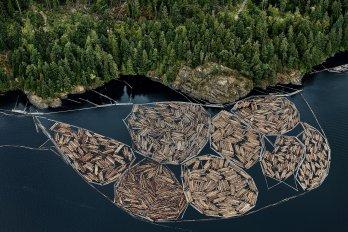 bundles of lumber on a lake