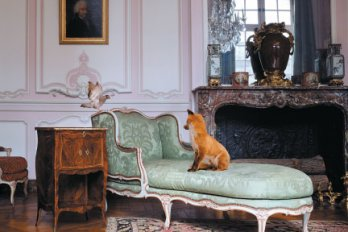 fox sitting on a chaise longue