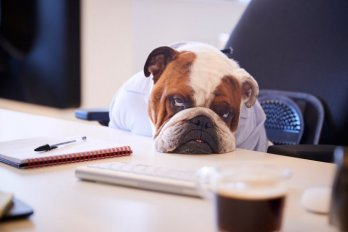 A dog dressed as a businessman sits slumped over a desk.