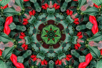 A kaleidoscopic oil painting composed of green leaves and red flower petals.