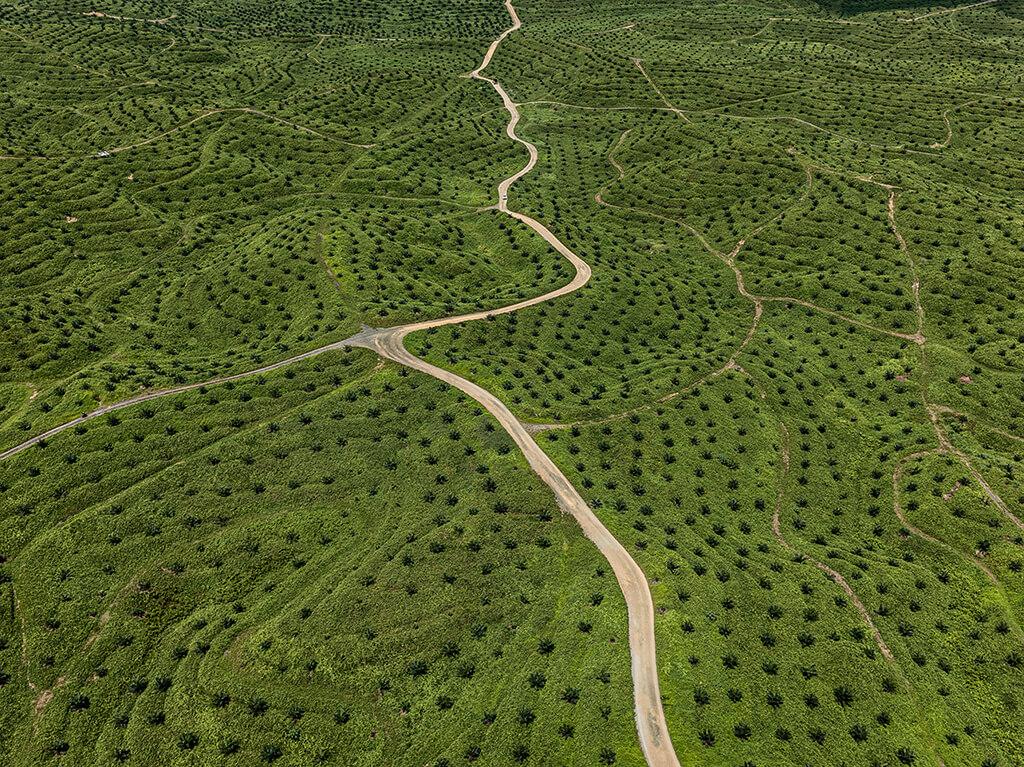 Palm Oil Plantation #2, Borneo, Malaysia, 2016, Edward Burtynsky.