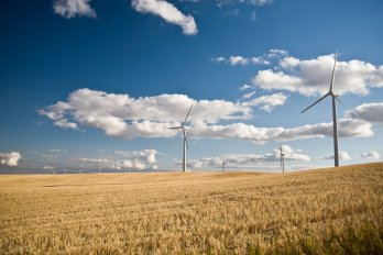 A photo of a field, with several wind turbines in the distance, against a blue sky with white clouds.