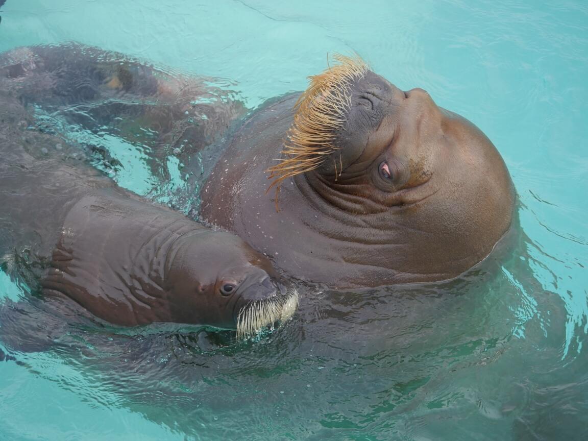 walrus baby boom the walrus