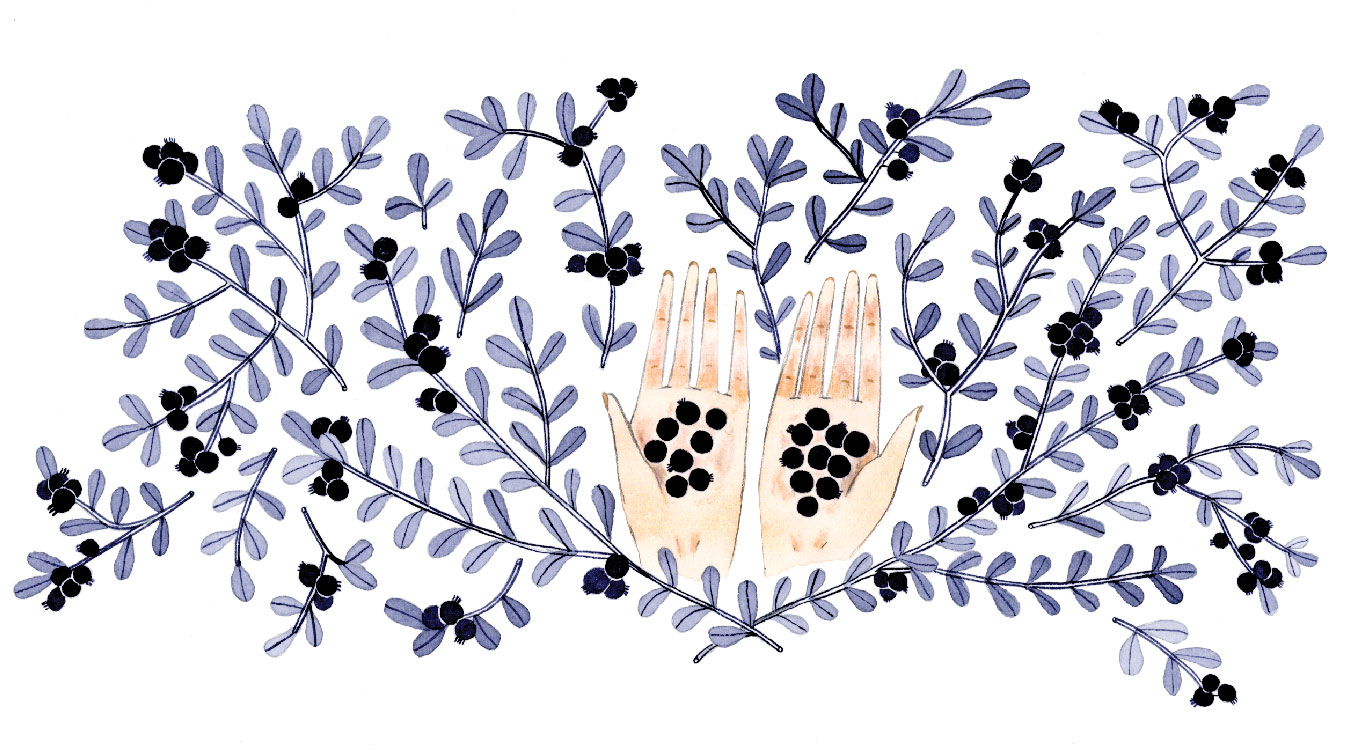 Illustration by Emily Taylor