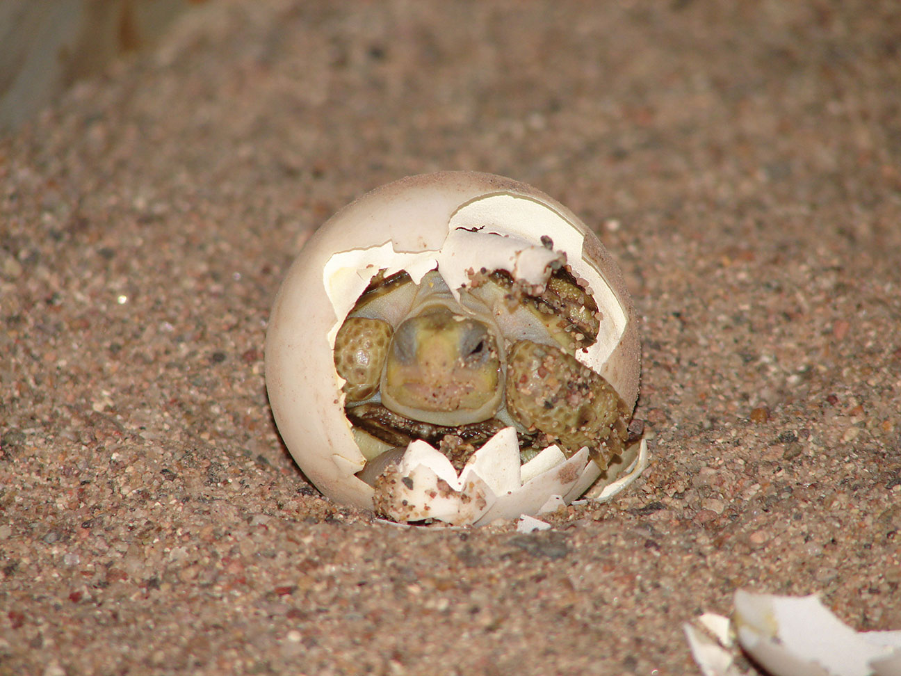 Photograph of a hatchling at Ladder Ranch by Steve Dobrott