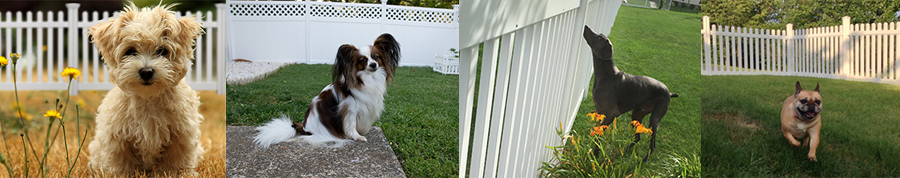 Yard Fencing for Dogs