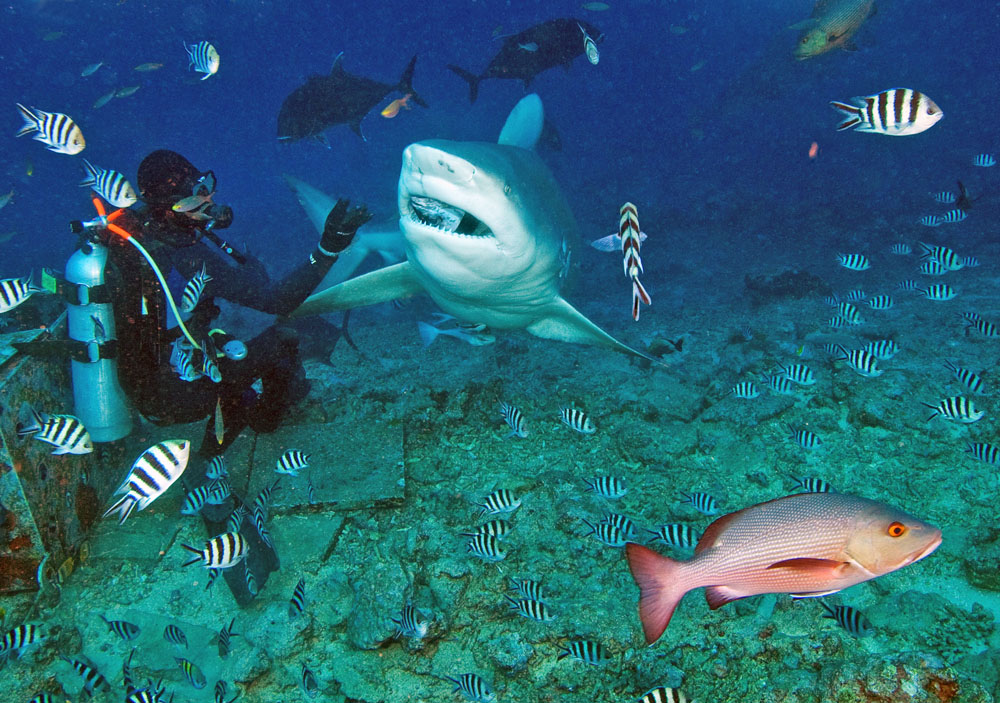 Sharks at Beqa Lagoon